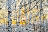 Fototapeta winter landscape with a sunset in the forest